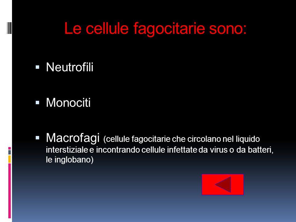 Le cellule fagocitarie sono: Neutrofili Monociti Macrofagi (cellule fagocitarie che circolano nel liquido interstiziale e incontrando cellule infettat
