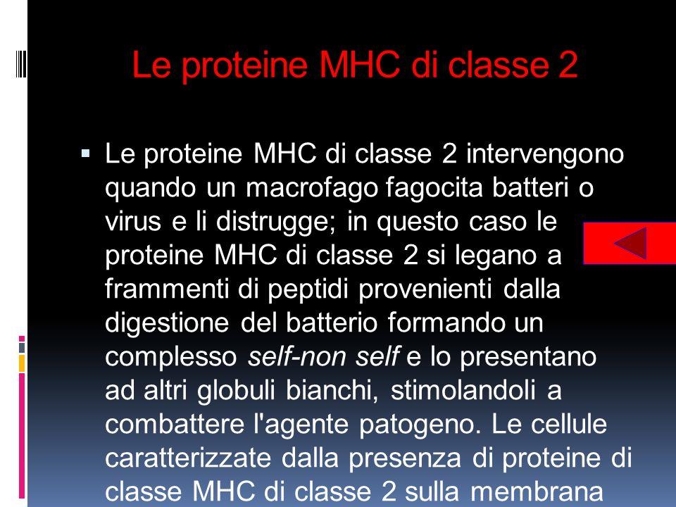 Le proteine MHC di classe 2 Le proteine MHC di classe 2 intervengono quando un macrofago fagocita batteri o virus e li distrugge; in questo caso le pr
