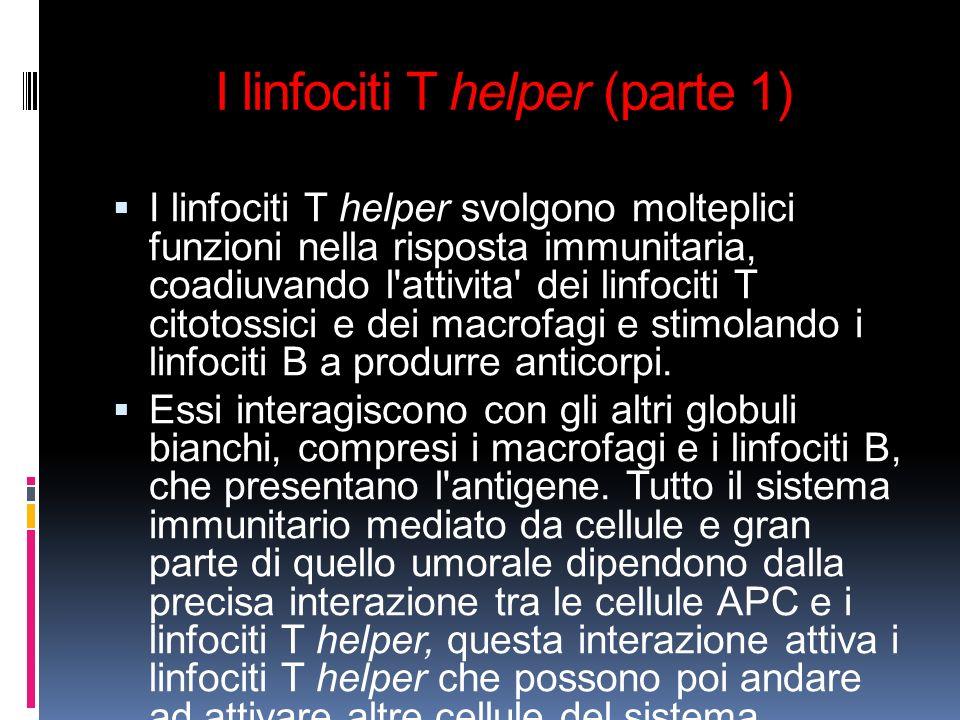 I linfociti T helper (parte 1) I linfociti T helper svolgono molteplici funzioni nella risposta immunitaria, coadiuvando l'attivita' dei linfociti T c
