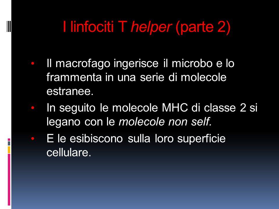 I linfociti T helper (parte 2) Il macrofago ingerisce il microbo e lo frammenta in una serie di molecole estranee. In seguito le molecole MHC di class