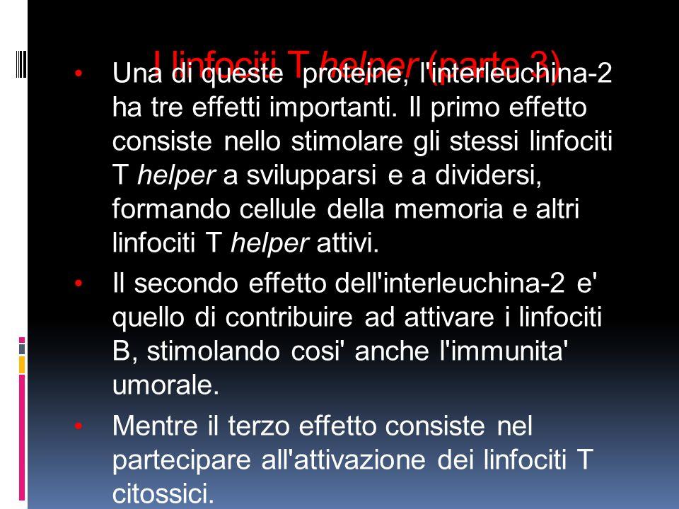 I linfociti T helper (parte 3) Una di queste proteine, l'interleuchina-2 ha tre effetti importanti. Il primo effetto consiste nello stimolare gli stes