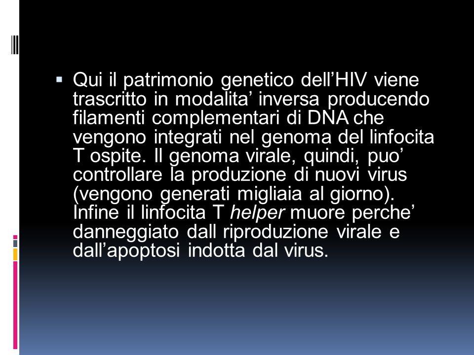 Qui il patrimonio genetico dellHIV viene trascritto in modalita inversa producendo filamenti complementari di DNA che vengono integrati nel genoma del