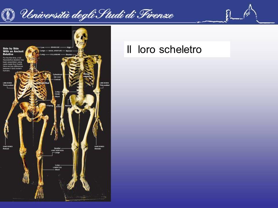 Il loro scheletro