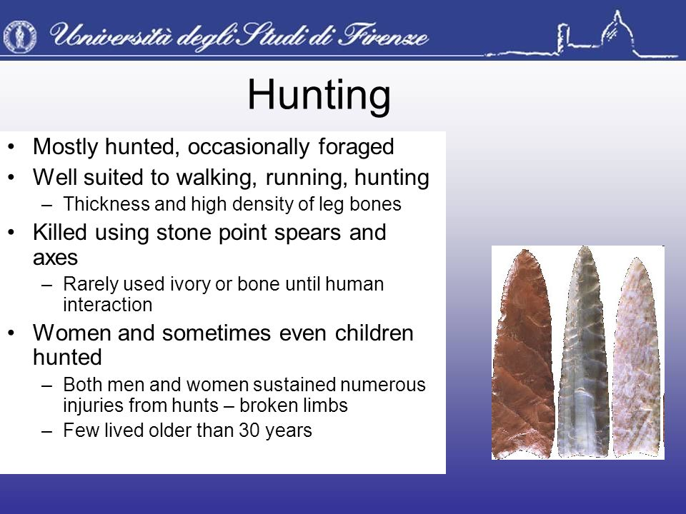 Hunting Mostly hunted, occasionally foraged Well suited to walking, running, hunting –Thickness and high density of leg bones Killed using stone point