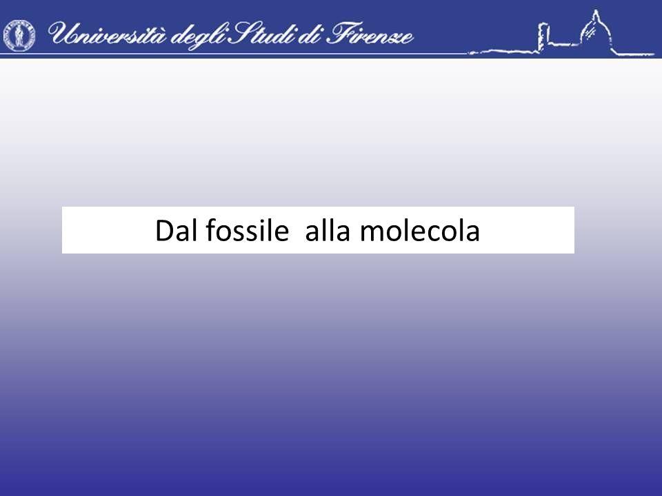 Dal fossile alla molecola