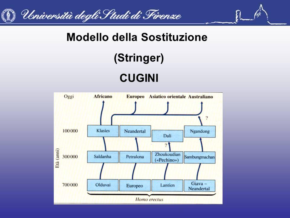 Modello della Sostituzione (Stringer) CUGINI