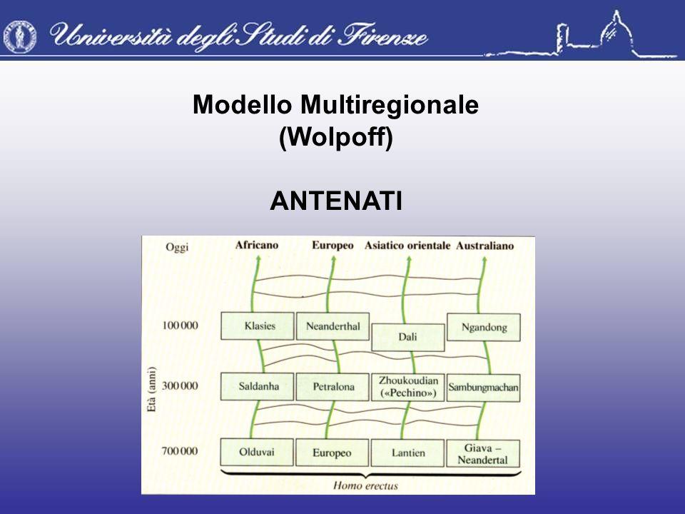 Modello Multiregionale (Wolpoff) ANTENATI