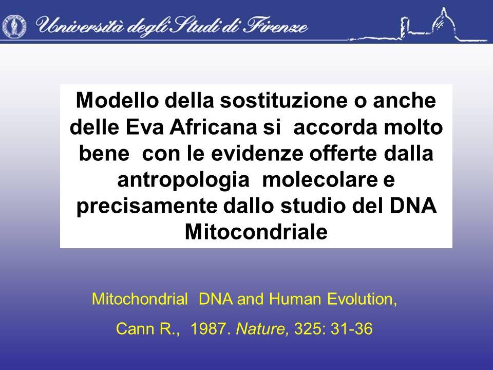 Modello della sostituzione o anche delle Eva Africana si accorda molto bene con le evidenze offerte dalla antropologia molecolare e precisamente dallo