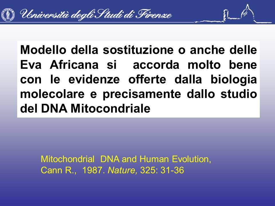 Modello della sostituzione o anche delle Eva Africana si accorda molto bene con le evidenze offerte dalla biologia molecolare e precisamente dallo stu