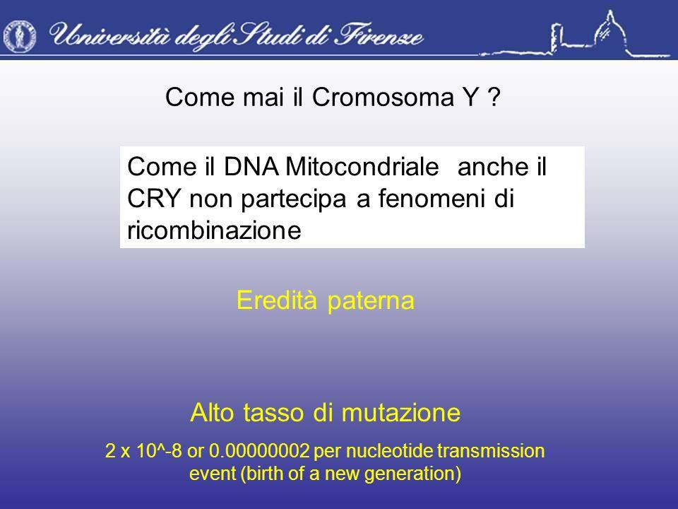 Come mai il Cromosoma Y ? Eredità paterna Come il DNA Mitocondriale anche il CRY non partecipa a fenomeni di ricombinazione Alto tasso di mutazione 2