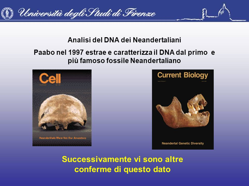 Analisi del DNA dei Neandertaliani Paabo nel 1997 estrae e caratterizza il DNA dal primo e più famoso fossile Neandertaliano Successivamente vi sono a
