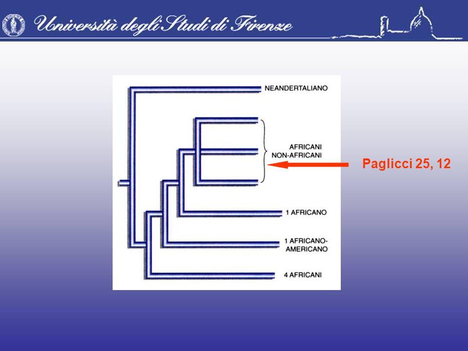 Paglicci 25, 12