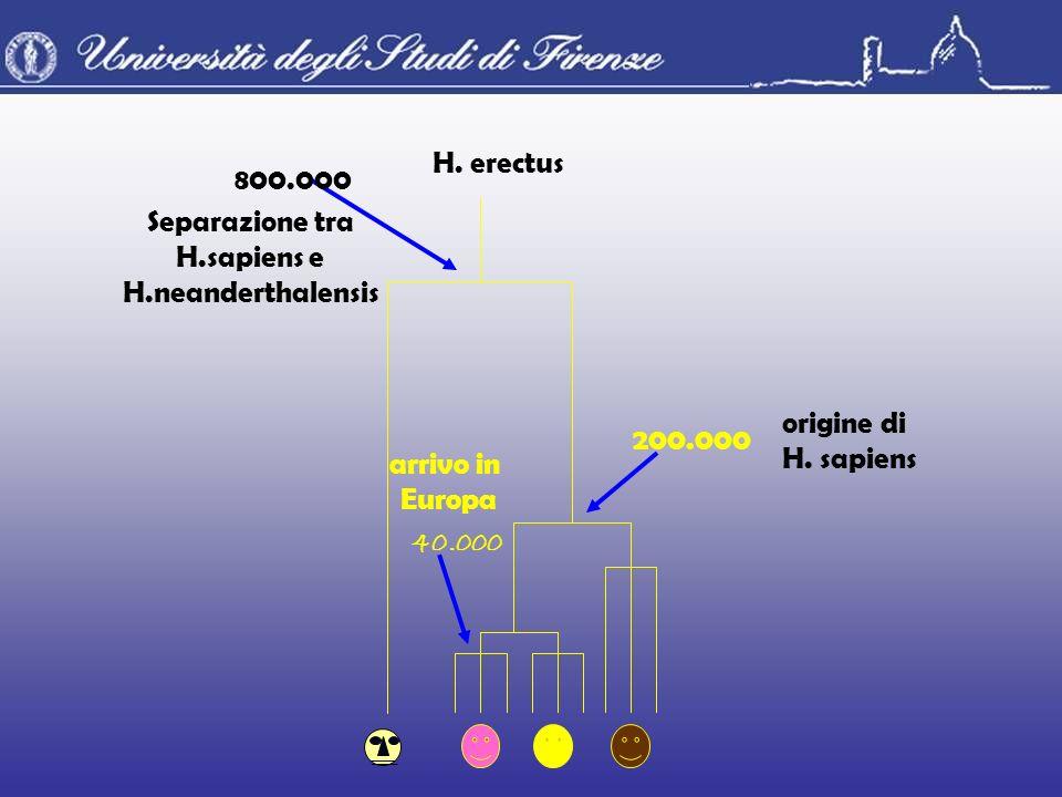 Separazione tra H.sapiens e H.neanderthalensis 800.000 H. erectus 40.000 arrivo in Europa 200.000 origine di H. sapiens