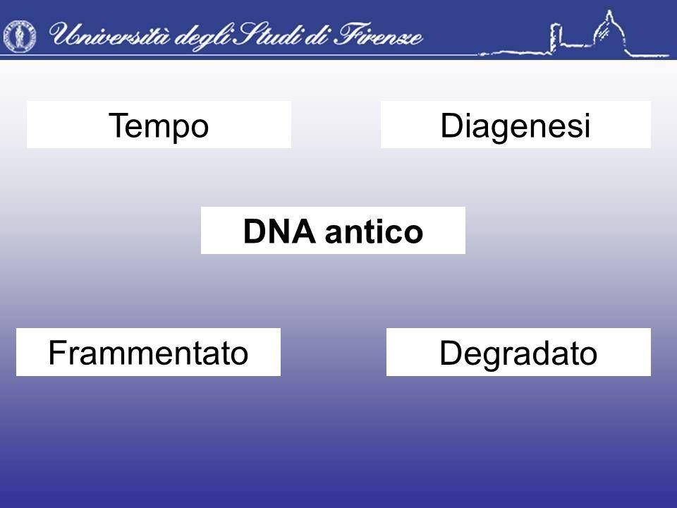 DNA antico TempoDiagenesi Frammentato Degradato