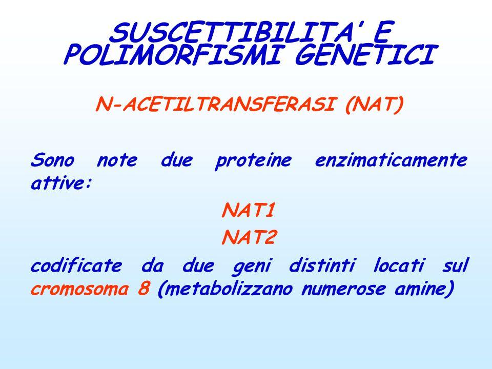 N-ACETILTRANSFERASI (NAT) Sono note due proteine enzimaticamente attive: NAT1 NAT2 codificate da due geni distinti locati sul cromosoma 8 (metabolizza