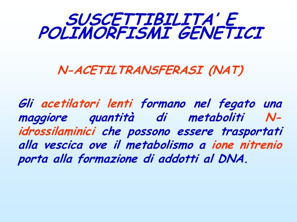N-ACETILTRANSFERASI (NAT) Gli acetilatori lenti formano nel fegato una maggiore quantità di metaboliti N- idrossilaminici che possono essere trasporta