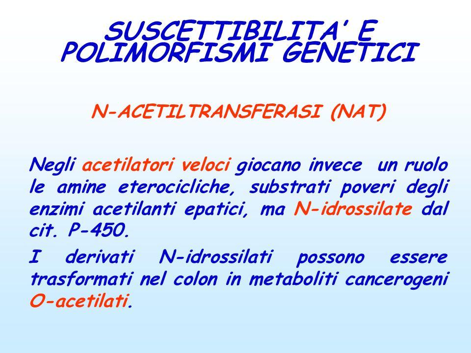 N-ACETILTRANSFERASI (NAT) Negli acetilatori veloci giocano invece un ruolo le amine eterocicliche, substrati poveri degli enzimi acetilanti epatici, m