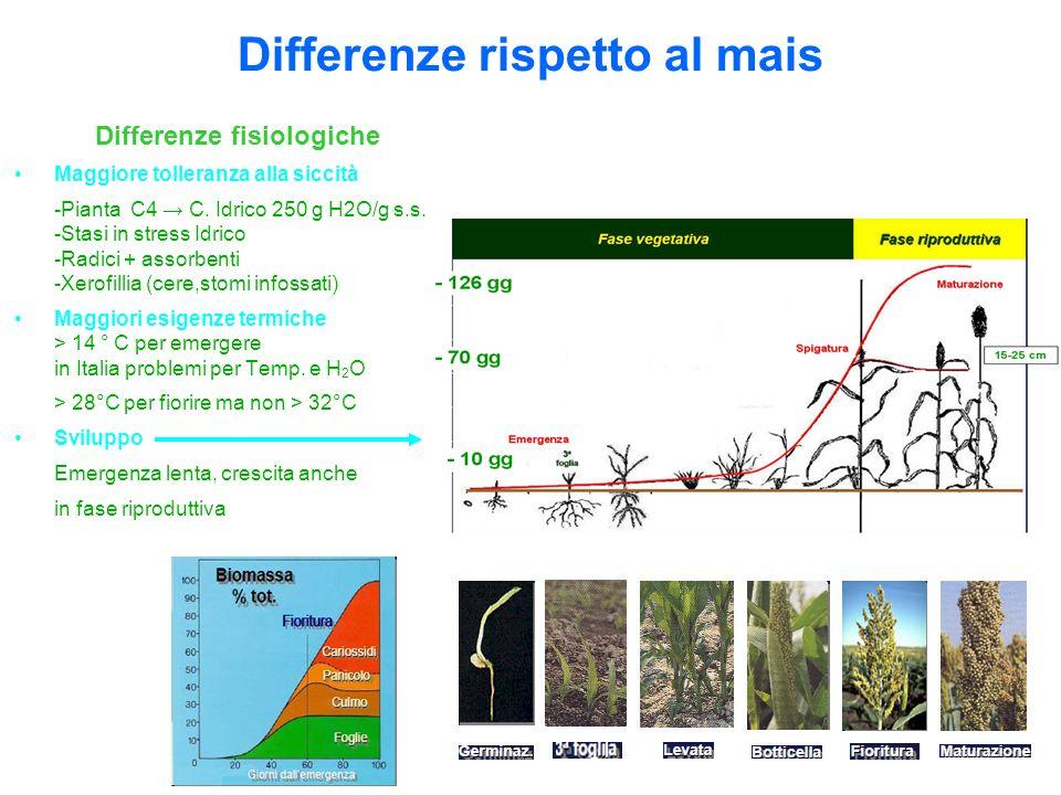 Differenze fisiologiche Maggiore tolleranza alla siccità -Pianta C4 C. Idrico 250 g H2O/g s.s. -Stasi in stress Idrico -Radici + assorbenti -Xerofilli