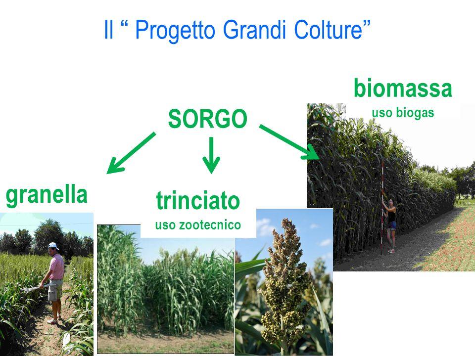Il Progetto Grandi Colture SORGO granella biomassa uso biogas trinciato uso zootecnico