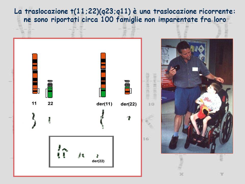 La traslocazione t(11;22)(q23;q11) è una traslocazione ricorrente: ne sono riportati circa 100 famiglie non imparentate fra loro