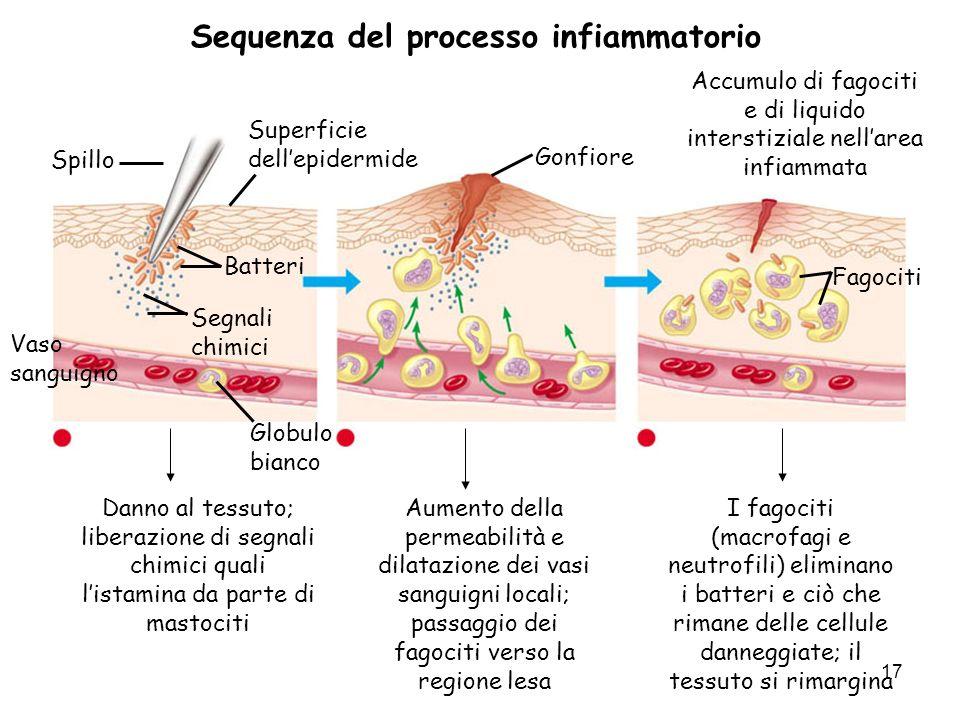 17 Spillo Superficie dellepidermide Batteri Segnali chimici Globulo bianco 1 Danno al tessuto; liberazione di segnali chimici quali listamina da parte