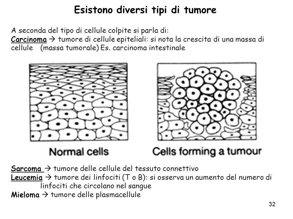 32 Esistono diversi tipi di tumore A seconda del tipo di cellule colpite si parla di: Carcinoma tumore di cellule epiteliali: si nota la crescita di u