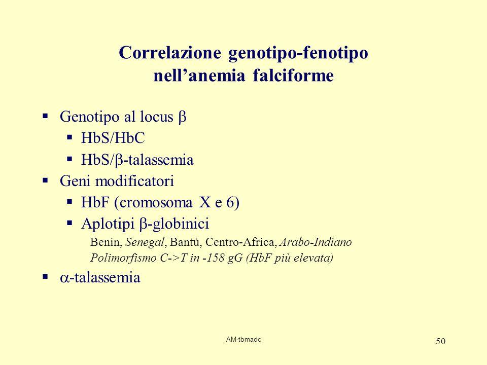 AM-tbmadc 50 Correlazione genotipo-fenotipo nellanemia falciforme Genotipo al locus HbS/HbC HbS/ -talassemia Geni modificatori HbF (cromosoma X e 6) A
