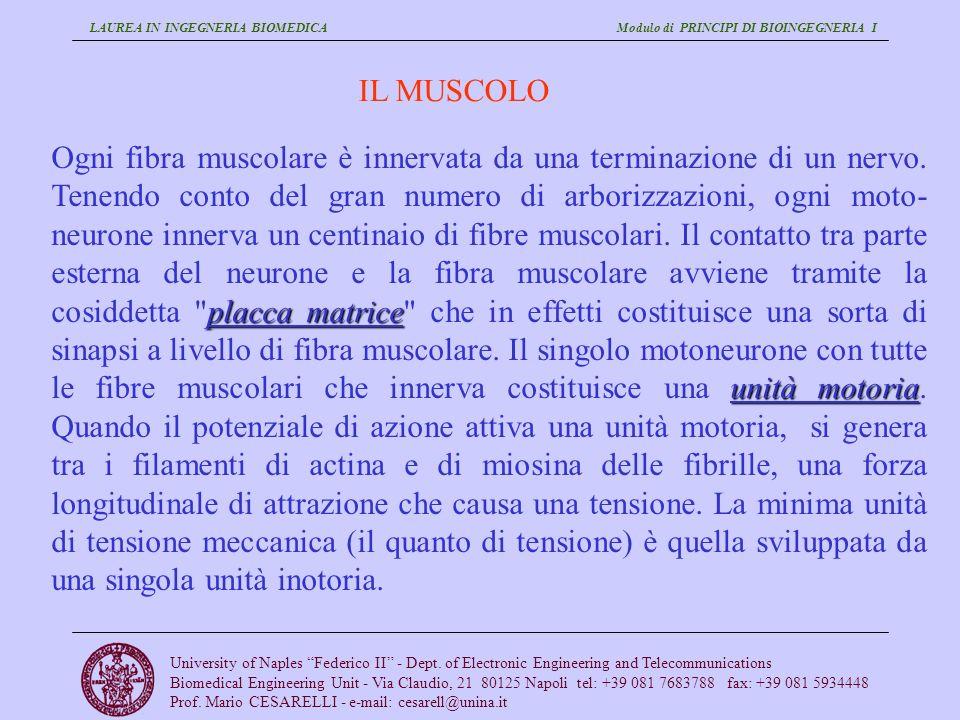 LAUREA IN INGEGNERIA BIOMEDICA Modulo di PRINCIPI DI BIOINGEGNERIA I University of Naples Federico II - Dept. of Electronic Engineering and Telecommun