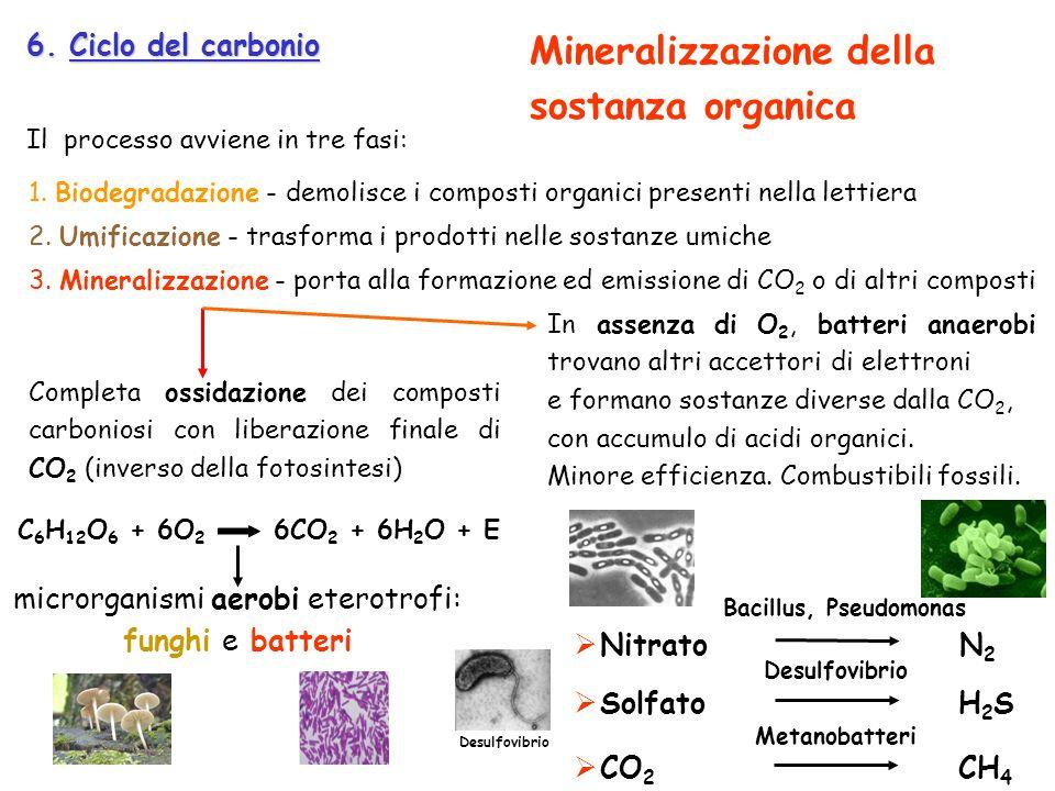 6. Ciclo del carbonio Il processo avviene in tre fasi: Completa ossidazione dei composti carboniosi con liberazione finale di CO 2 (inverso della foto