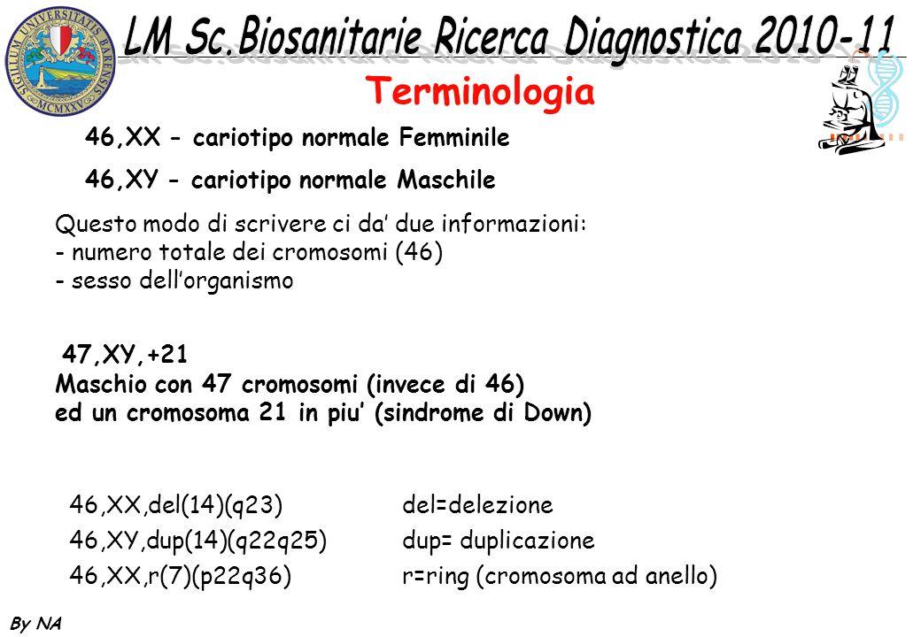 By NA 46,XX - cariotipo normale Femminile 46,XY - cariotipo normale Maschile Questo modo di scrivere ci da due informazioni: - numero totale dei cromo