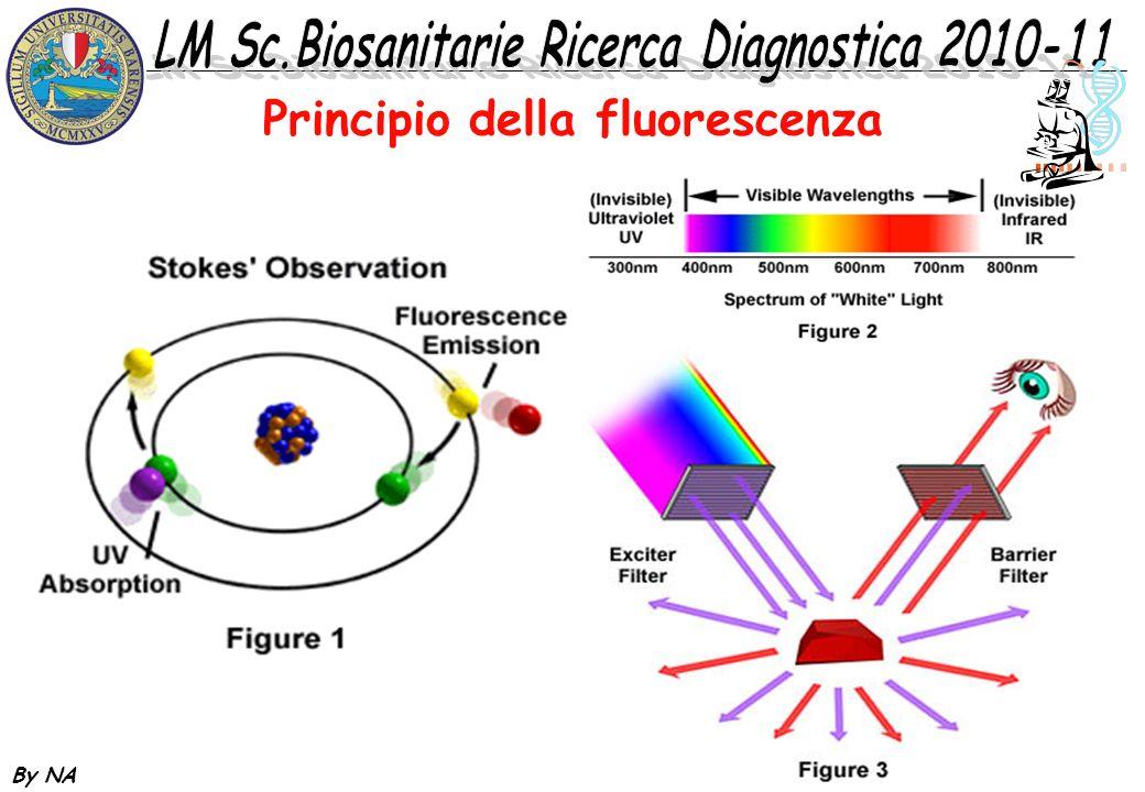By NA Principio della fluorescenza