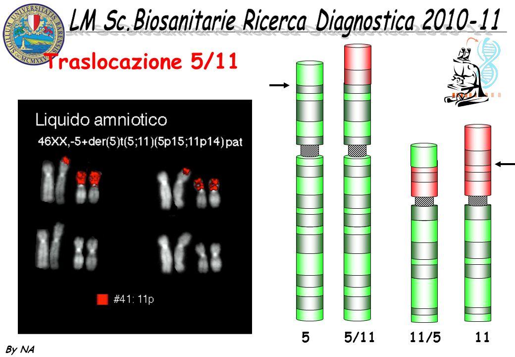 By NA Traslocazione 5/11 5 5/11 11/5 11