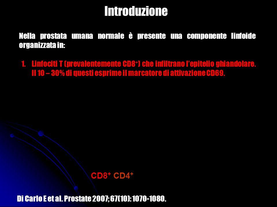Introduzione Nella prostata umana normale è presente una componente linfoide organizzata in: 1.Linfociti T (prevalentemente CD8 + ) che infiltrano lep
