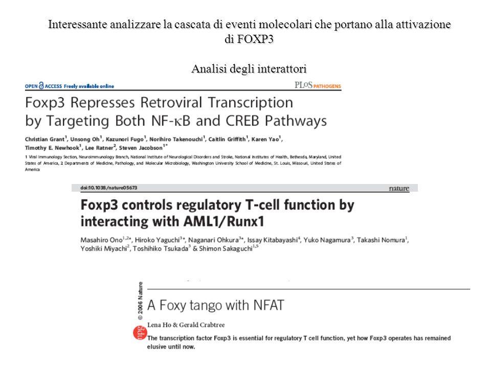 Interessante analizzare la cascata di eventi molecolari che portano alla attivazione di FOXP3 Analisi degli interattori