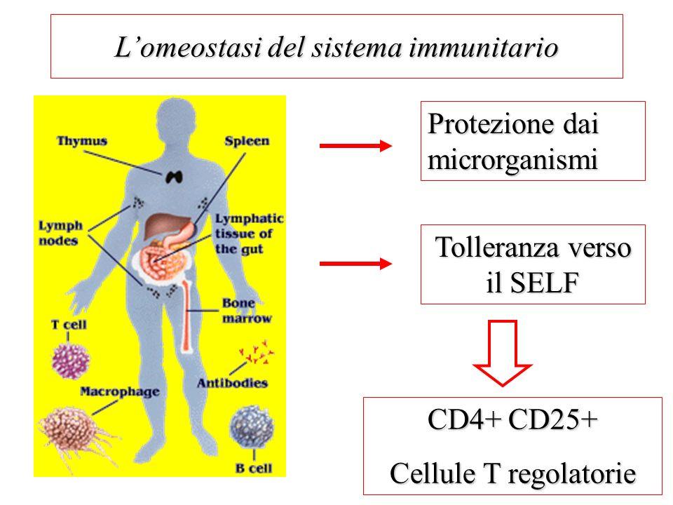 Lomeostasi del sistema immunitario Protezione dai microrganismi Tolleranza verso il SELF CD4+ CD25+ Cellule T regolatorie