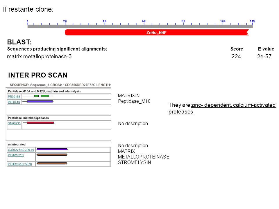 BLAST: Sequences producing significant alignments: Score E value matrix metalloproteinase-3 224 2e-57 INTER PRO SCAN MATRIXIN Peptidase_M10 No descrip