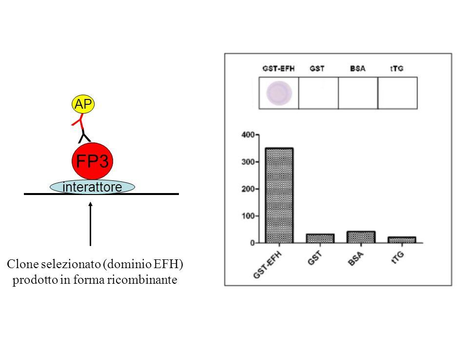 interattore FP3 Y Y AP Clone selezionato (dominio EFH) prodotto in forma ricombinante