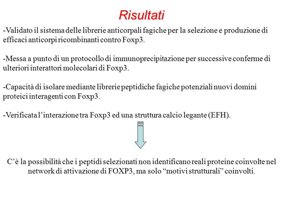 Cè la possibilità che i peptidi selezionati non identificano reali proteine coinvolte nel network di attivazione di FOXP3, ma solo motivi strutturali