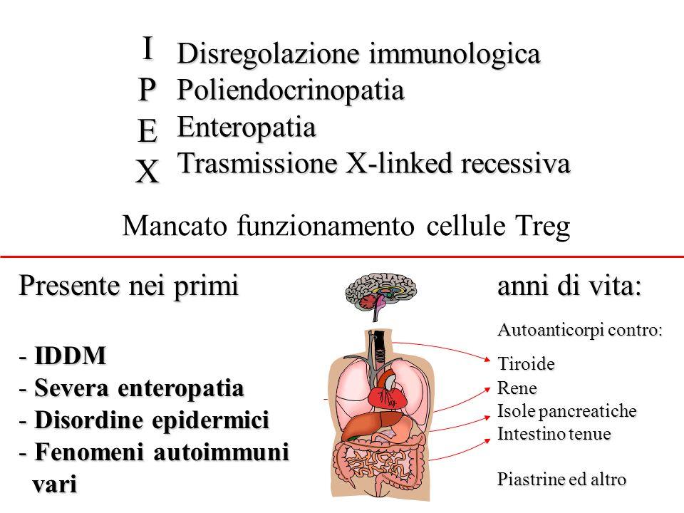 Presente nei primi anni di vita: - IDDM - Severa enteropatia - Disordine epidermici - Fenomeni autoimmuni vari vari Autoanticorpi contro: TiroideRene