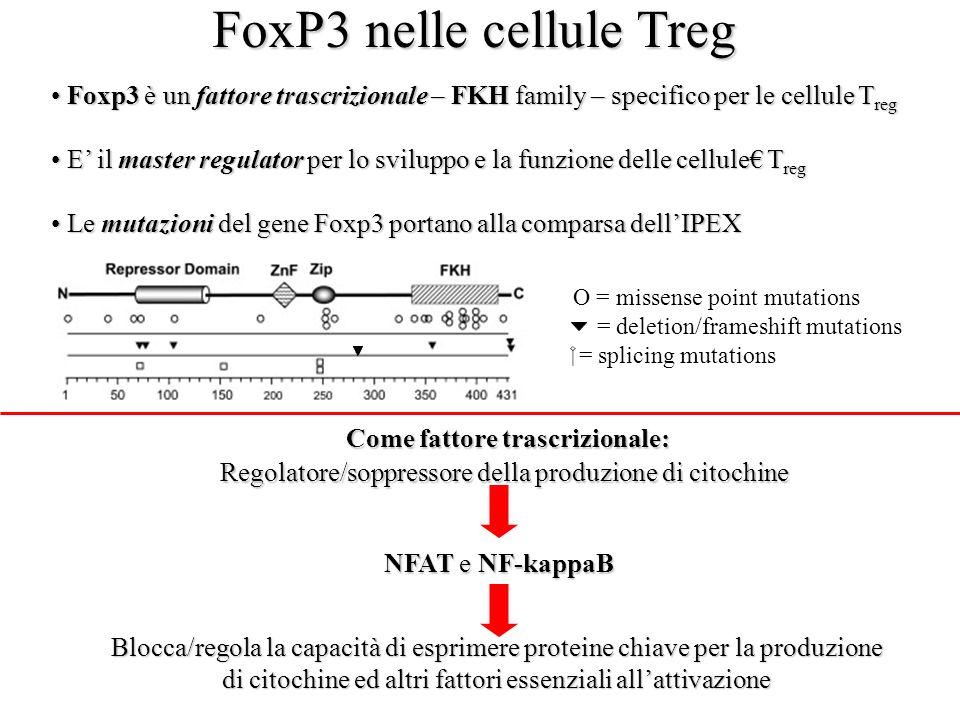 FoxP3 nelle cellule Treg Foxp3 è un fattore trascrizionale – FKH family – specifico per le cellule T reg Foxp3 è un fattore trascrizionale – FKH famil