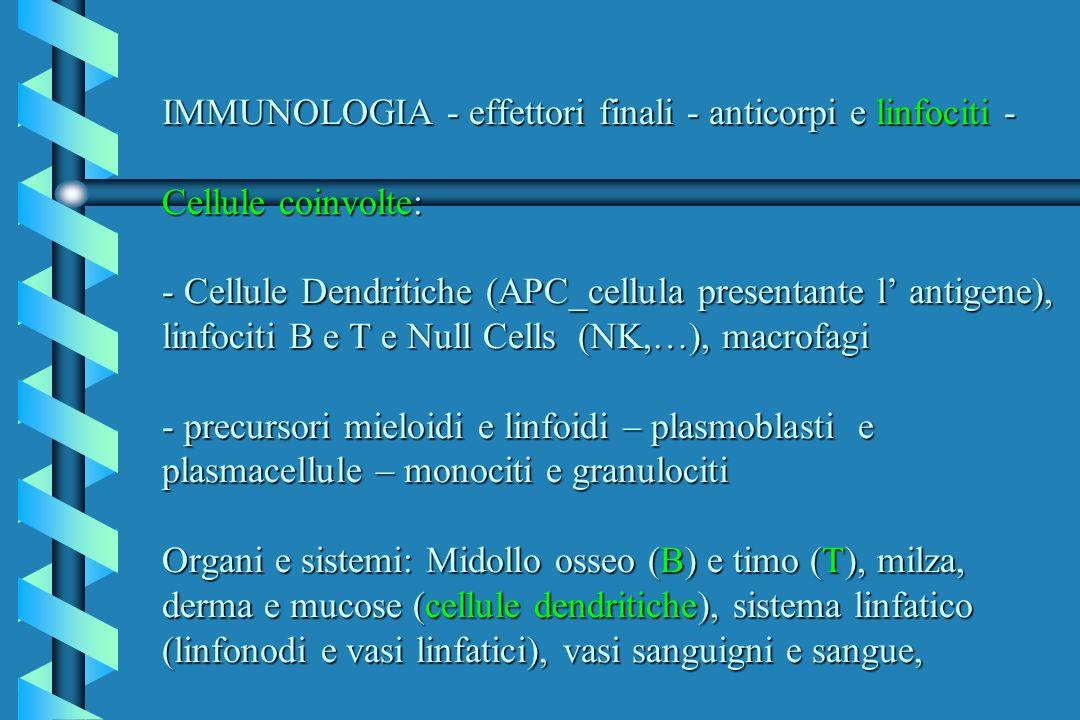IMMUNOLOGIA - effettori finali - anticorpi e linfociti - Cellule coinvolte: - Cellule Dendritiche (APC_cellula presentante l antigene), linfociti B e