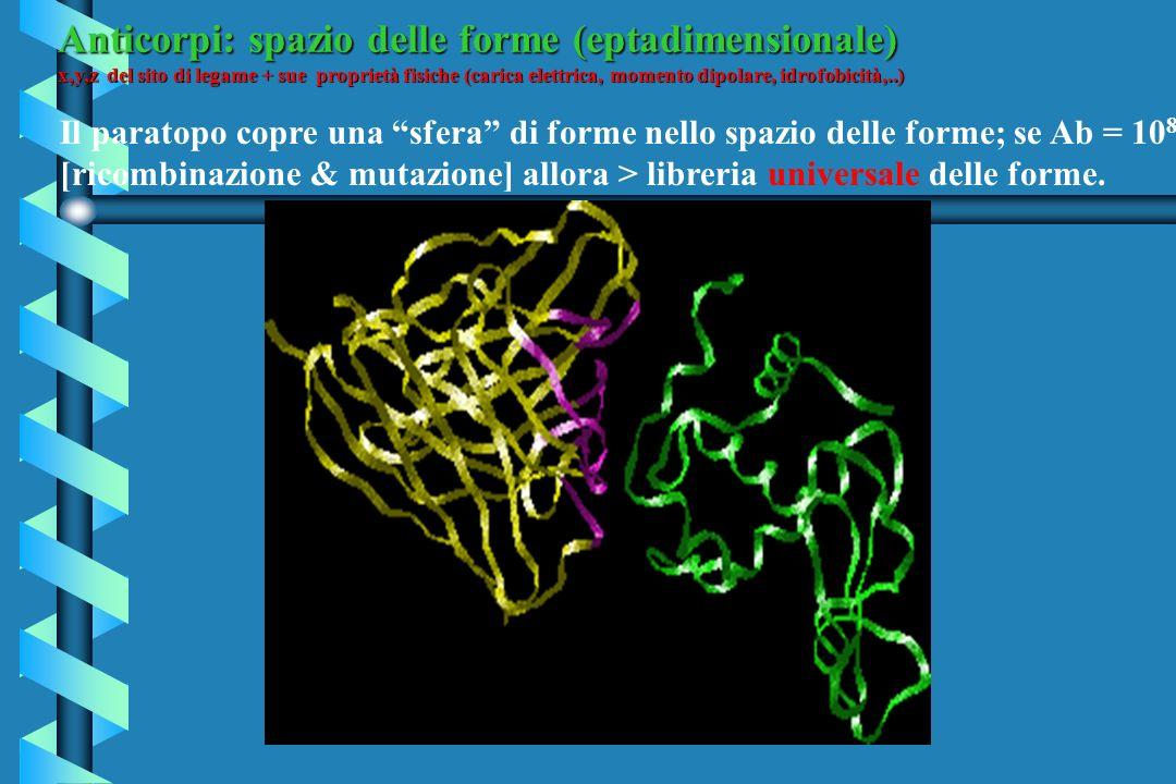 Anticorpi: spazio delle forme (eptadimensionale) x,y,z del sito di legame + sue proprietà fisiche (carica elettrica, momento dipolare, idrofobicità,..