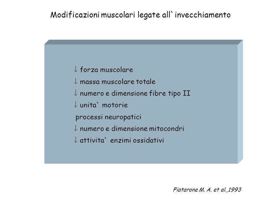 Modificazioni muscolari legate all`invecchiamento forza muscolare massa muscolare totale numero e dimensione fibre tipo II unita` motorie processi neu
