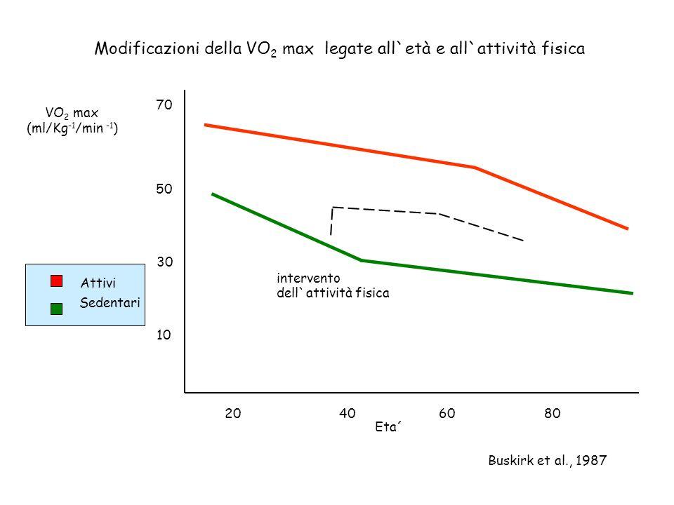 Modificazioni della VO 2 max legate all`età e all`attività fisica Buskirk et al., 1987 20406080 Eta´ VO 2 max (ml/Kg -1 /min -1 ) intervento dell`atti