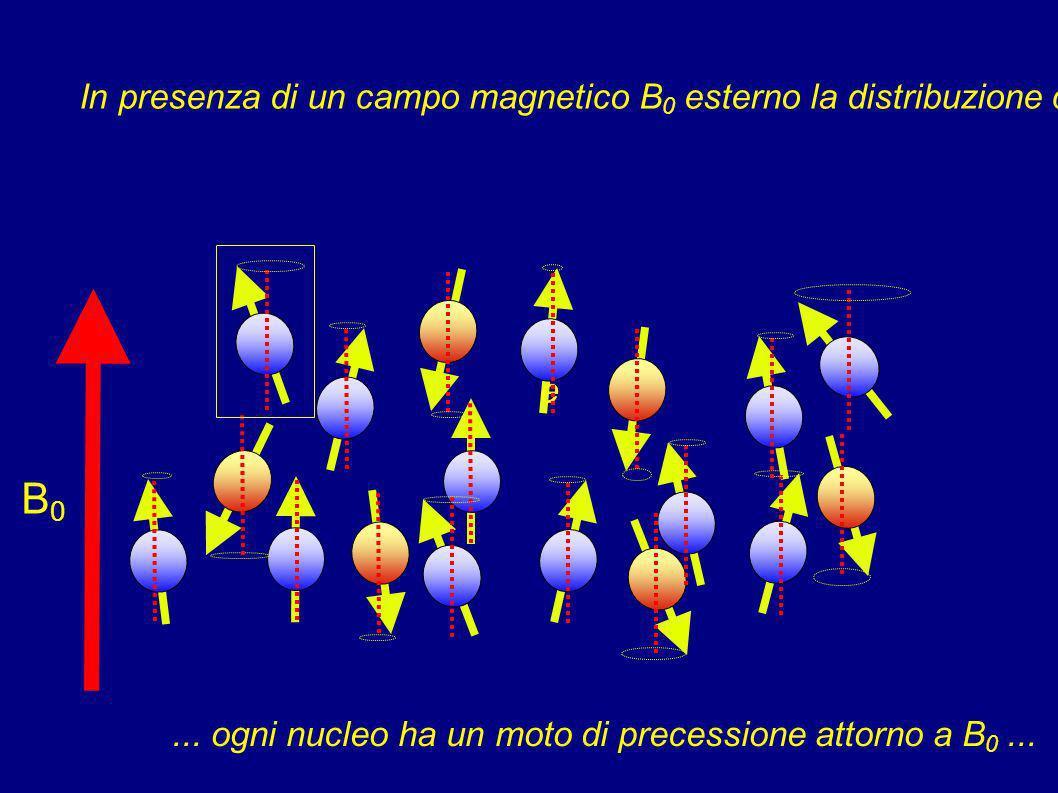 In assenza di campo magnetico esterno i nuclei sono distribuiti in modo casuale