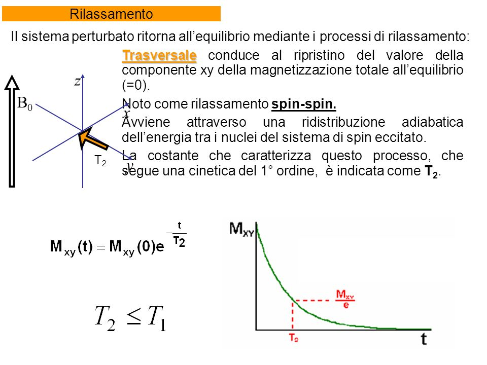 Rilassamento Trasversale Trasversale conduce al ripristino del valore della componente xy della magnetizzazione totale allequilibrio (=0).