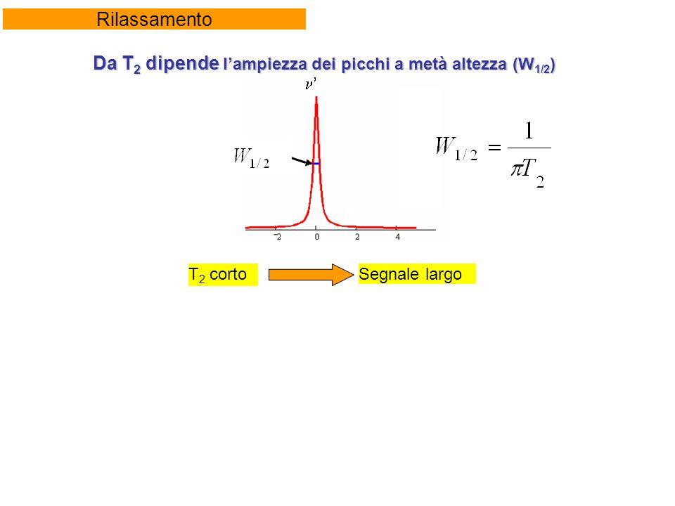 Rilassamento Da T 2 dipende lampiezza dei picchi a metà altezza (W 1/2 ) T 2 cortoSegnale largo
