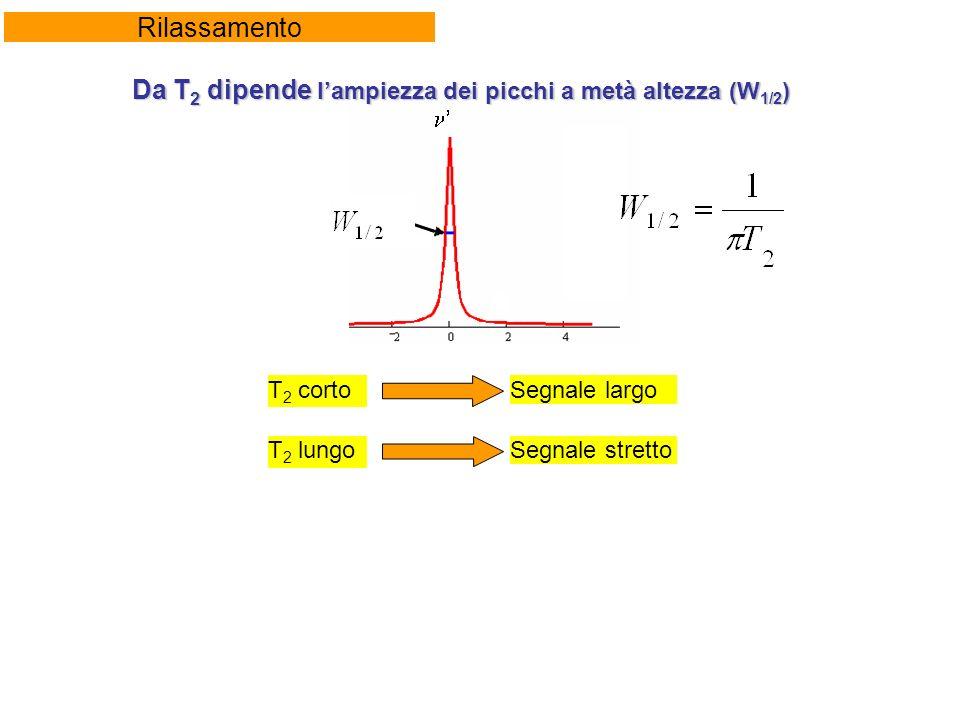 Rilassamento Da T 2 dipende lampiezza dei picchi a metà altezza (W 1/2 ) T 2 cortoSegnale largo T 2 lungoSegnale stretto