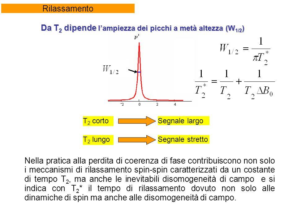 Rilassamento Nella pratica alla perdita di coerenza di fase contribuiscono non solo i meccanismi di rilassamento spin-spin caratterizzati da un costante di tempo T 2, ma anche le inevitabili disomogeneità di campo e si indica con T 2 * il tempo di rilassamento dovuto non solo alle dinamiche di spin ma anche alle disomogeneità di campo.