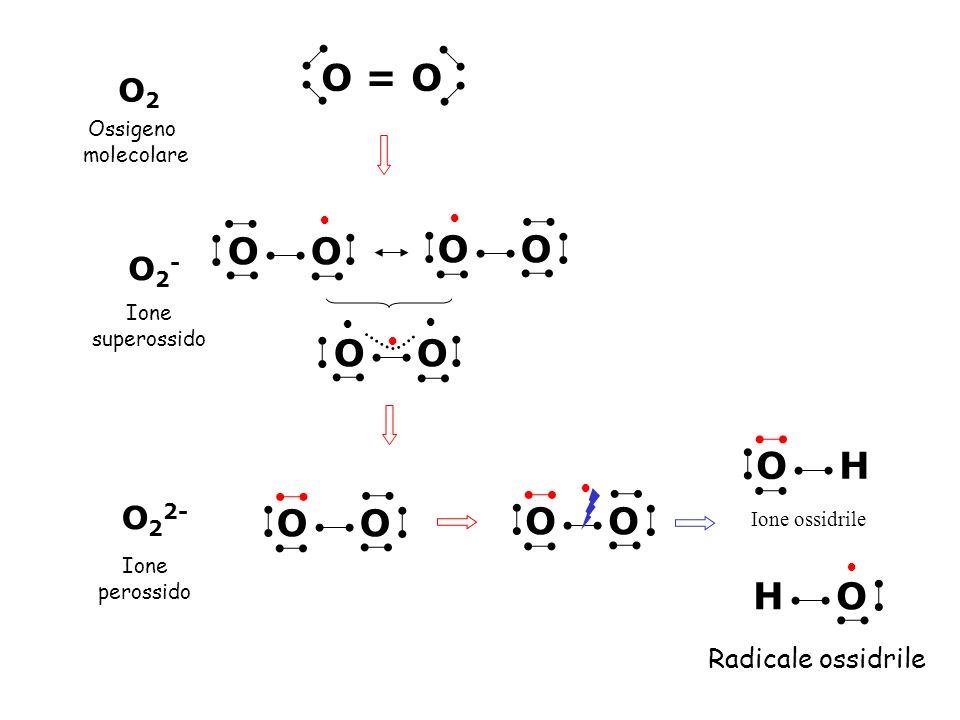 O2O2 O2-O2- O 2 2- Ossigeno molecolare Ione superossido Ione perossido Ione ossidrile Radicale ossidrile O = O O O O O O H H O O
